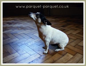 Parquet Installation - Pip approves